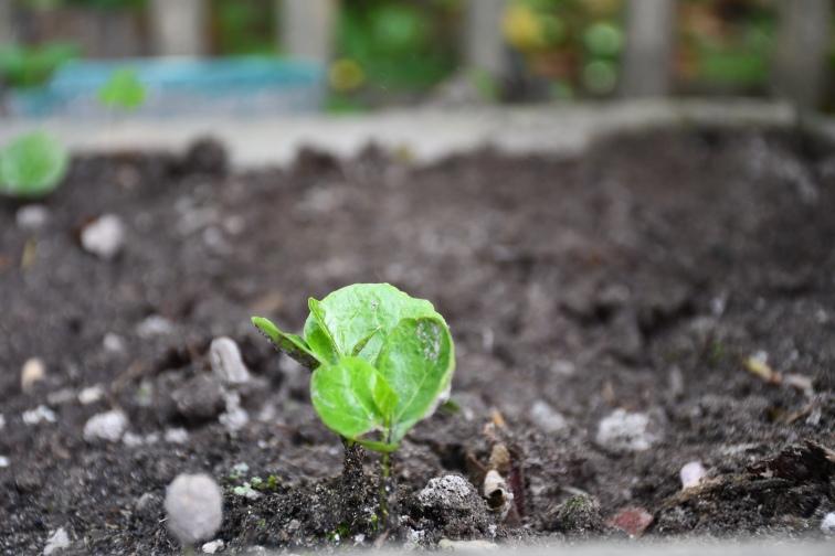 4. Pflanze mit Blättern